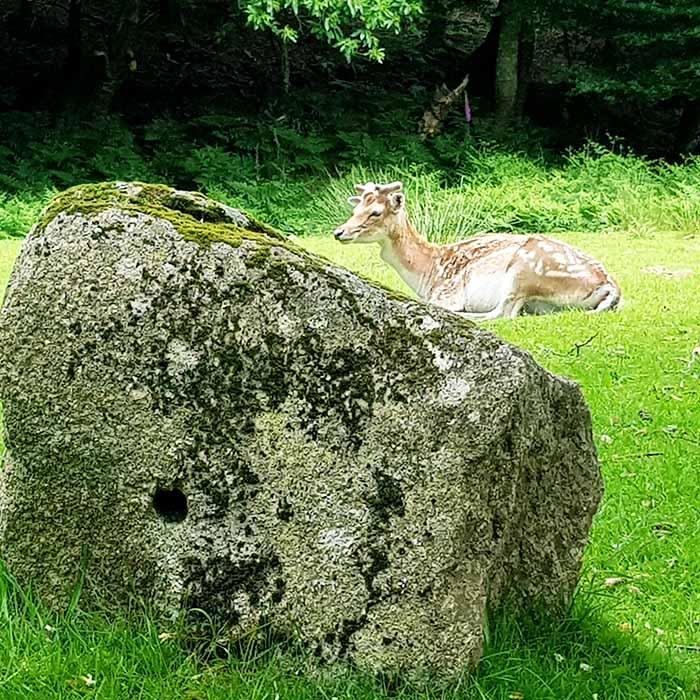 Balade en voiturette électrique ou à pied dans le parc naturel du Stérou à Priziac dans le Morbihan.