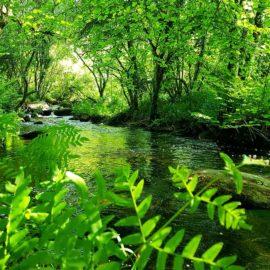 Ballade le long de la rivière au parc du stérou priziac