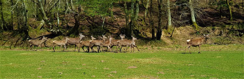 Campagne e don pour la Sauvegarde d'Espèces Européennes au Parc Naturel du Stéou à Priziac dans le Morbihan