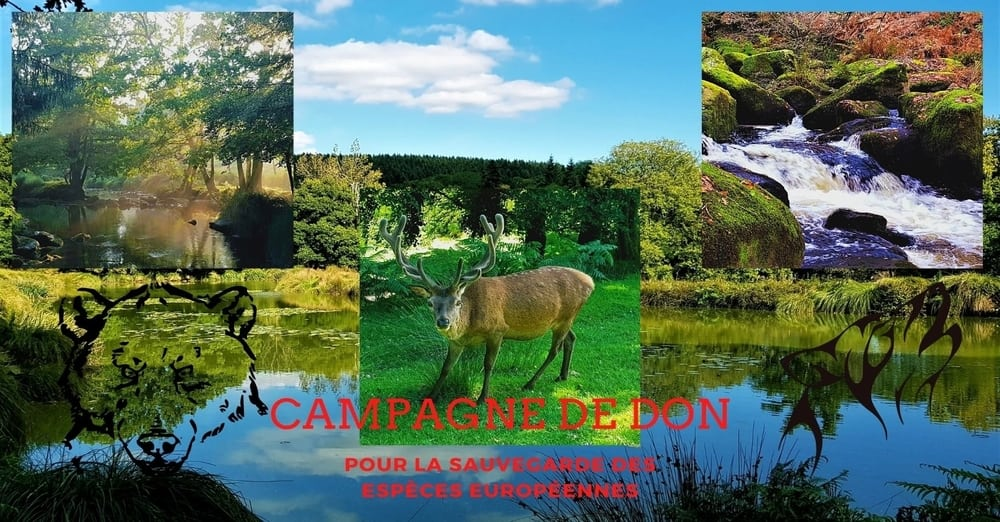 Campagne de don pour la Sauvegarde d'Espèces Européennes au Parc Naturel du Stérou à Priziac dans le Morbihan